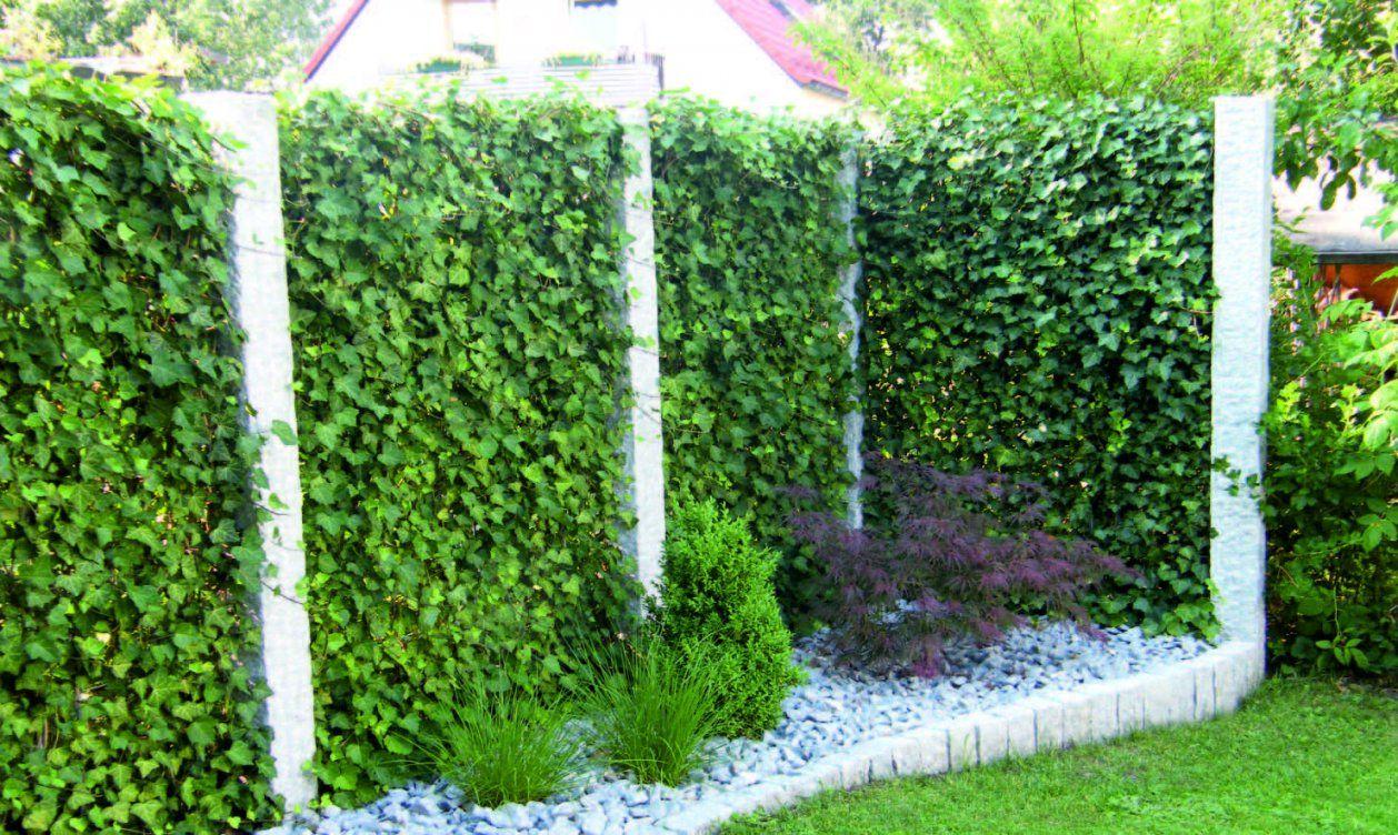 Efeu Sichtschutz Selber Machen Haus Design Ideen