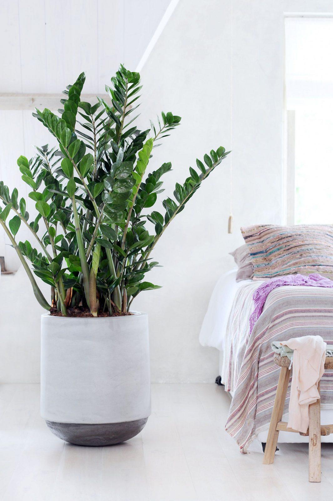 Die Richtige Zimmerpflanze Für Das Schlafzimmer  Reinigen Luft Und von Luftreinigende Pflanzen Fürs Schlafzimmer Photo