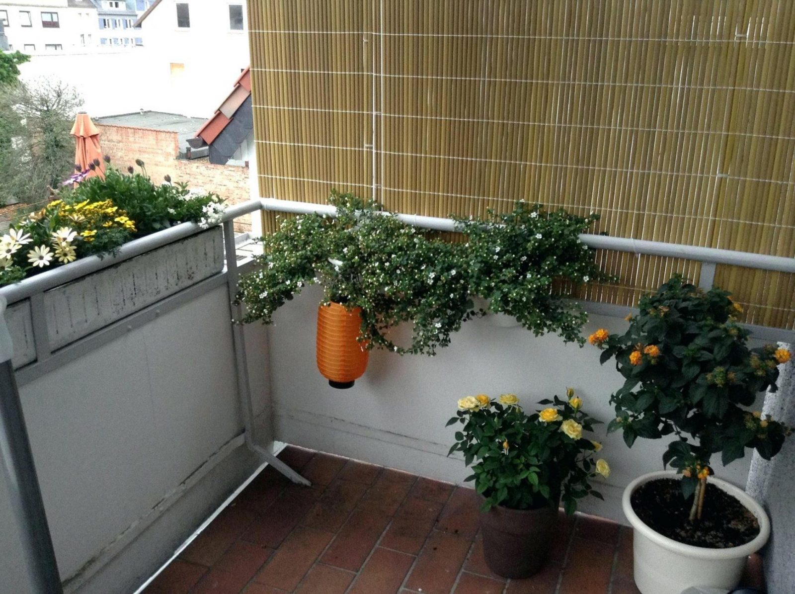Efeu Balkon Hecke Am Laufenden Meter Fa R Den Cm Hoch Breit Hedera von Hecke Am Laufenden Meter Selber Machen Bild