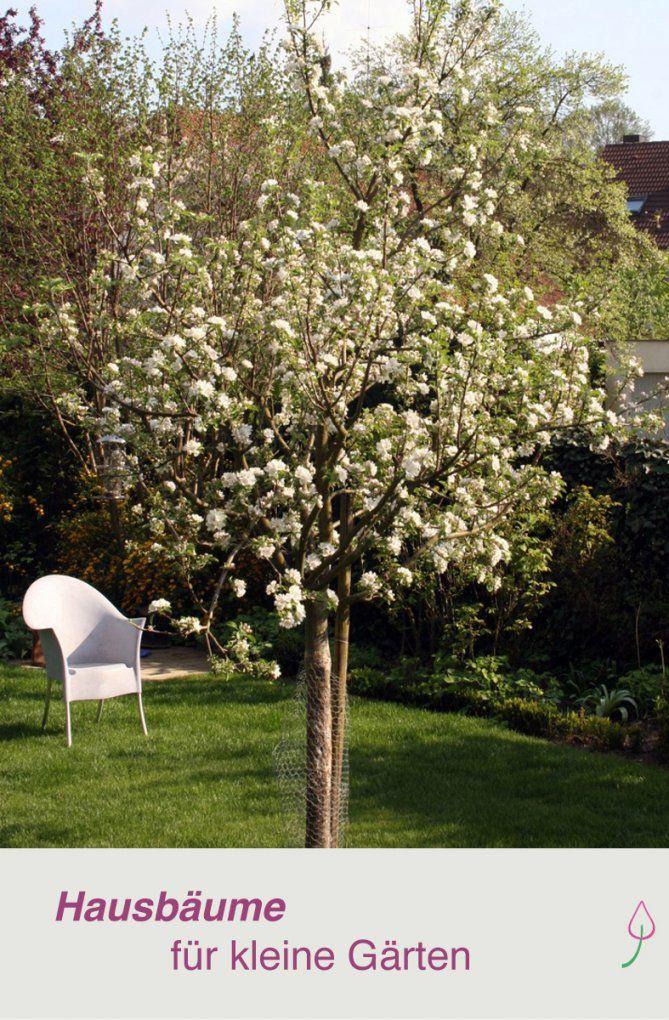 Ein Baum Für Den Garten  Schöne Bäume Kleine Gärten Und Vorschlag von Schnell Wachsende Bäume Für Kleine Gärten Bild