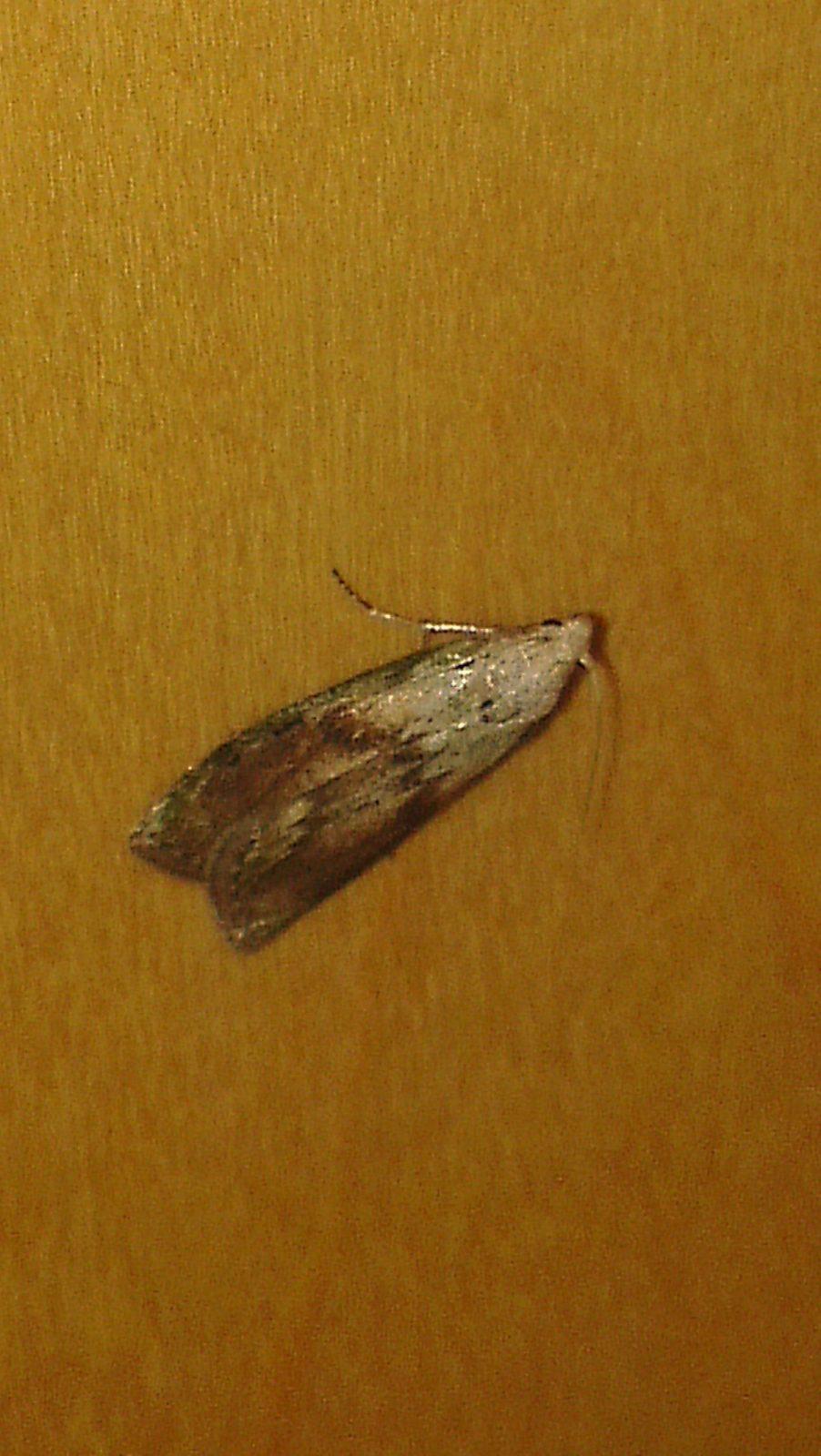 Elegant Zeitgena¶Ssisch Motten Im Wohnzimmer Kleine Woher Fliegen von Motten Maden An Der Decke Photo