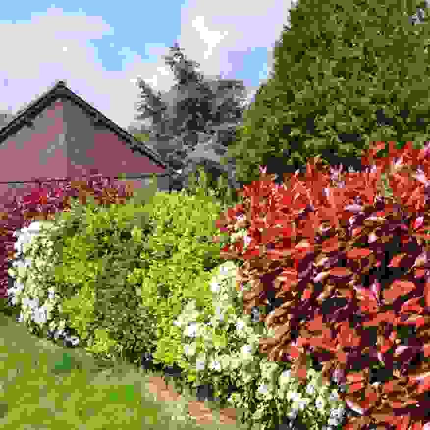 Elegantes Pflegeleichte Pflanzen Für Den Garten Ist Das Beste Von von Pflegeleichte Pflanzen Für Den Vorgarten Bild