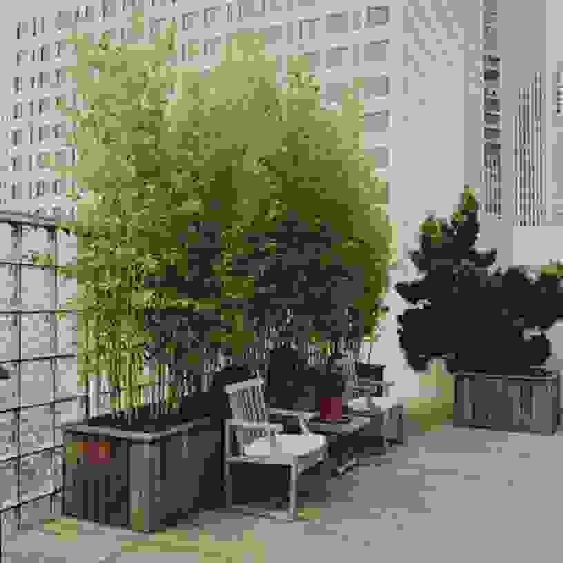 Elegantes Unikat Sichtschutz Terrasse Pflanzen 30 Beste Design Ideen von Sichtschutz Für Terrasse Pflanzen Photo