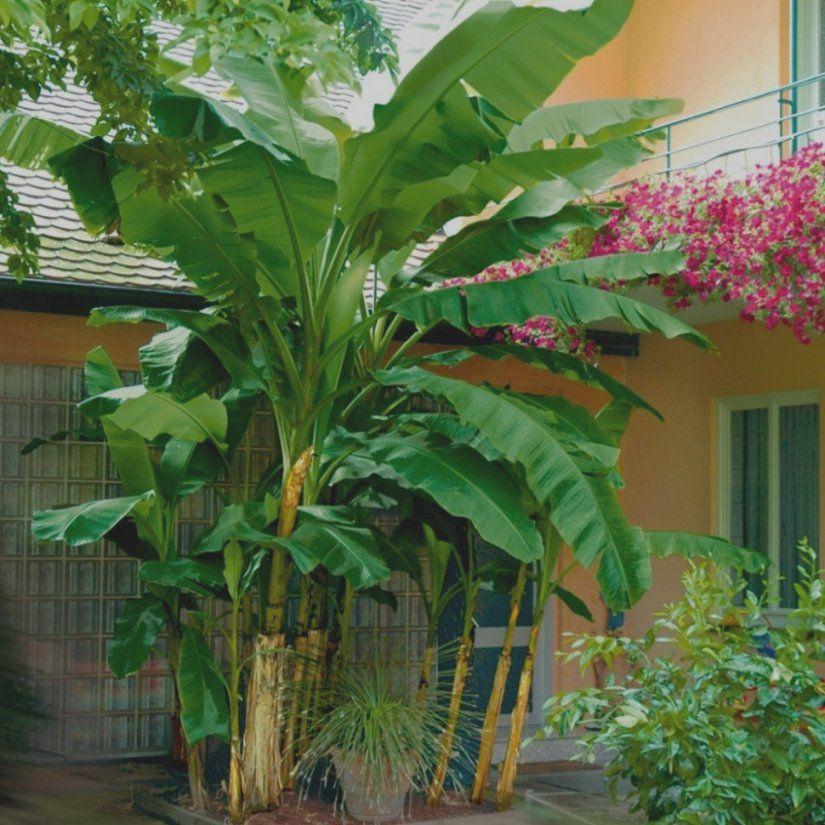 Erstaunlich Exotische Pflanzen Liste Lexikon Von A Wie Ananas Bis Z von Winterharte Exotische Pflanzen Für Den Garten Bild