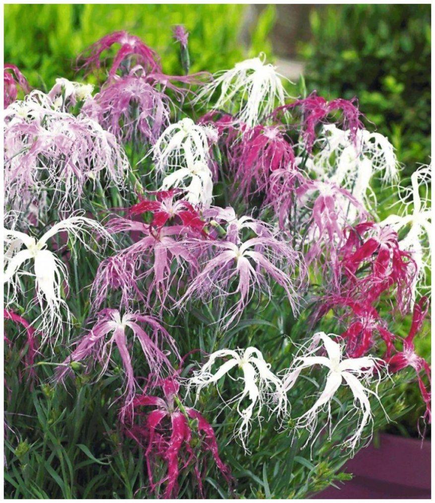 Erstaunlich Winterharte Pflanzen Garten Galerie Der Garten Stil von Winterharte Exotische Pflanzen Für Den Garten Bild