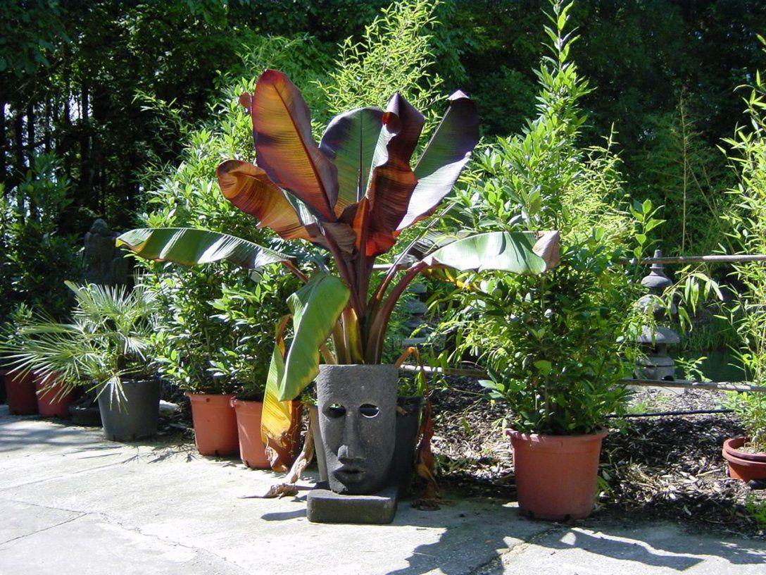Exotische Pflanzen Fur Den Garten Siddhimind Von Winterharte