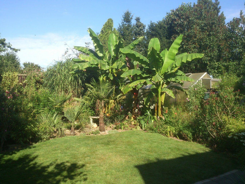 Exotische Pflanzen In Deutschland Winterhart Palmen Bananen von Winterharte Exotische Pflanzen Für Den Garten Bild