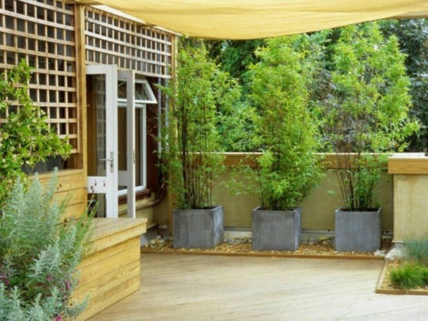 Fabelhaft Sichtschutz Terrasse Pflanzen Ideen Fr Bambus Im Garten