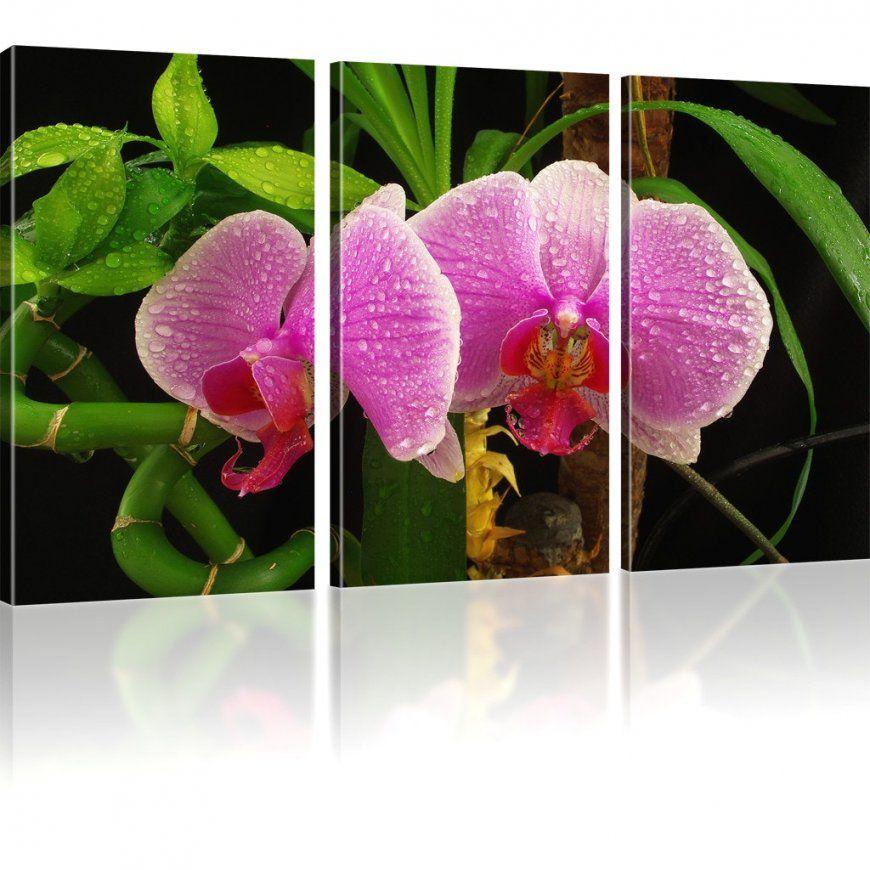 Fabelhafte Ideen Orchideen Wandbilder Und Erstaunliche Bilder von Orchideen Bilder Auf Leinwand Bild