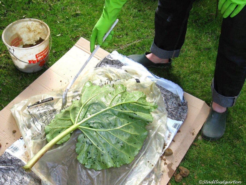 Gartendeko Xl Tags  Frisch Gartendeko Aus Beton Selbstgemacht von Gartendeko Aus Beton Selbstgemacht Bild