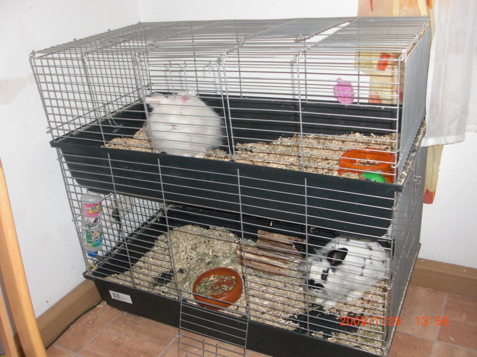 Hasen Kaninchen Tieranzeigen Seite 52 von Kaninchenkäfig Für Die Wohnung Photo