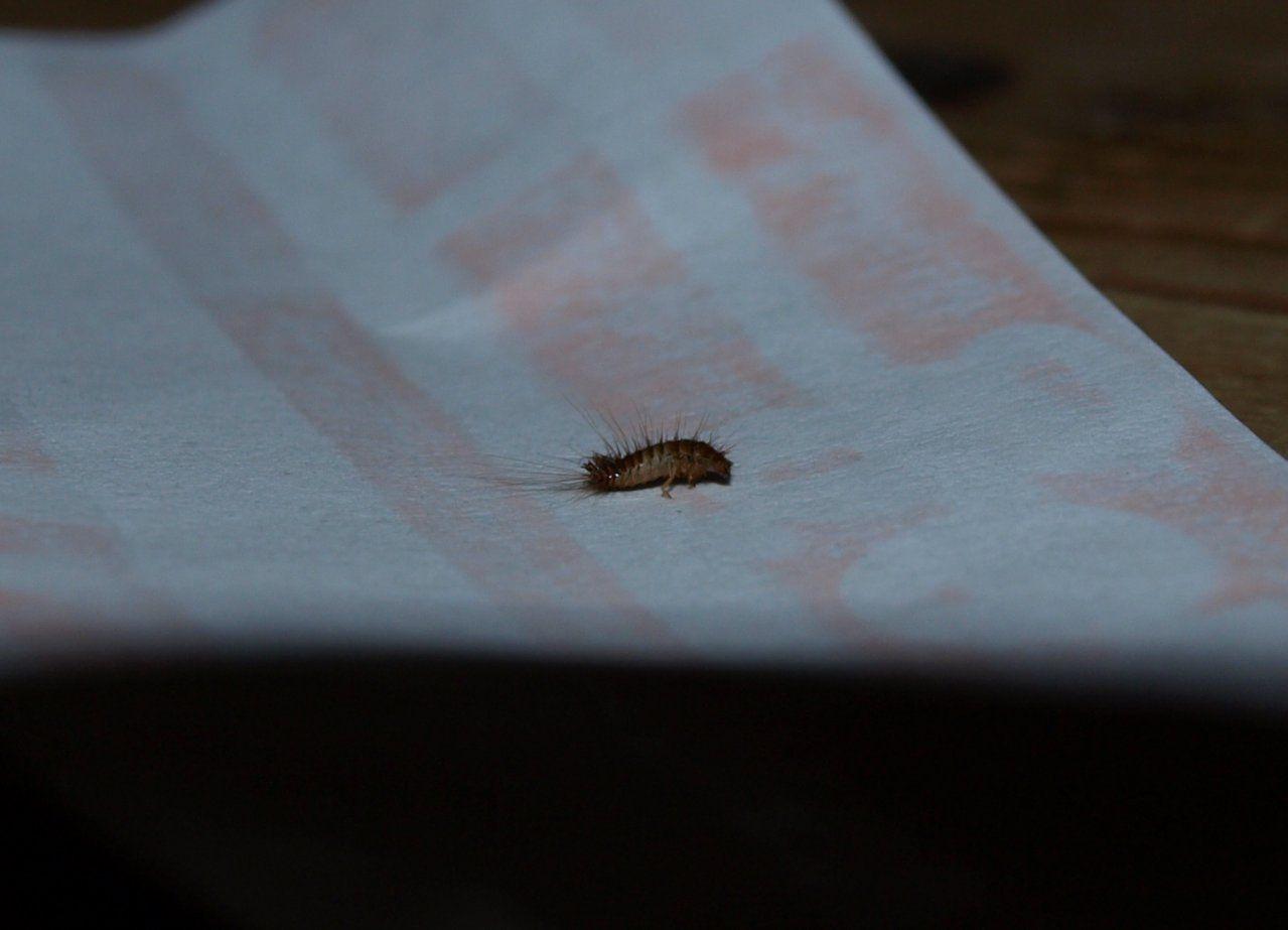Hilfe Motten In Der Wohnung  Hausgarten von Motten In Der Wohnung Woher Bild