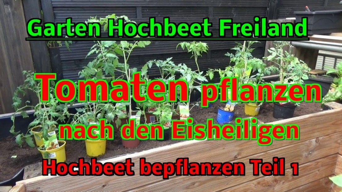 Hochbeet Im Garten Selbstversorgung  Tomaten Pflanzen Im Freiland von Hochbeet Bepflanzen Erstes Jahr Bild