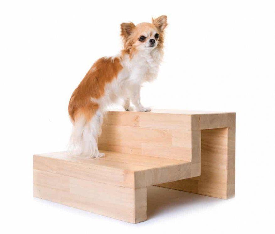 Hundetreppe  Die Hilfe Im Hundealltag  Orthopädisches Hundebett von Hundetreppe 60 Cm Hoch Photo