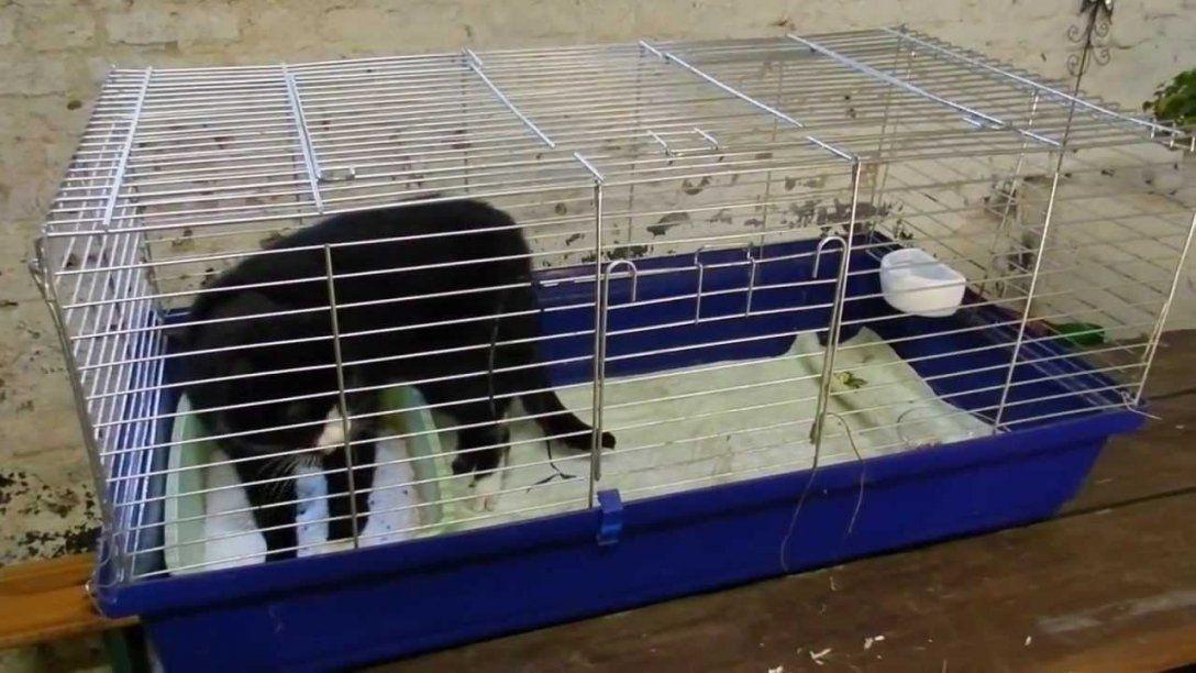 Käfighaltung Für Katzen Artgerecht (Käfigkatze Funny Cat von Kaninchenkäfig Für Die Wohnung Bild