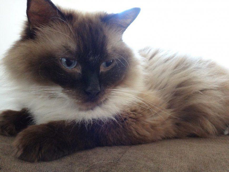 Katzen Urin Auf Dem Sofa  Polsterreinigung Schnell & Zuverlässig von Katzenurin Aus Teppich Entfernen Photo