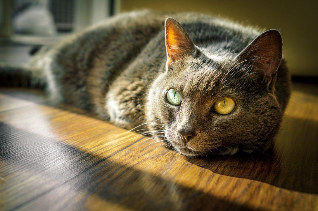 Katzenurin Entfernen  So Geht Der Gestank Restlos Weg von Katzenurin Aus Teppich Entfernen Bild