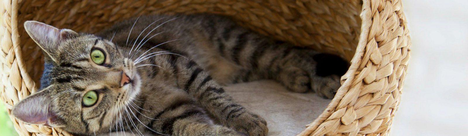 Katzenurin Und Gestank Entfernen  So Geht's  Kratzbaumkauf von Katzenurin Aus Teppich Entfernen Photo