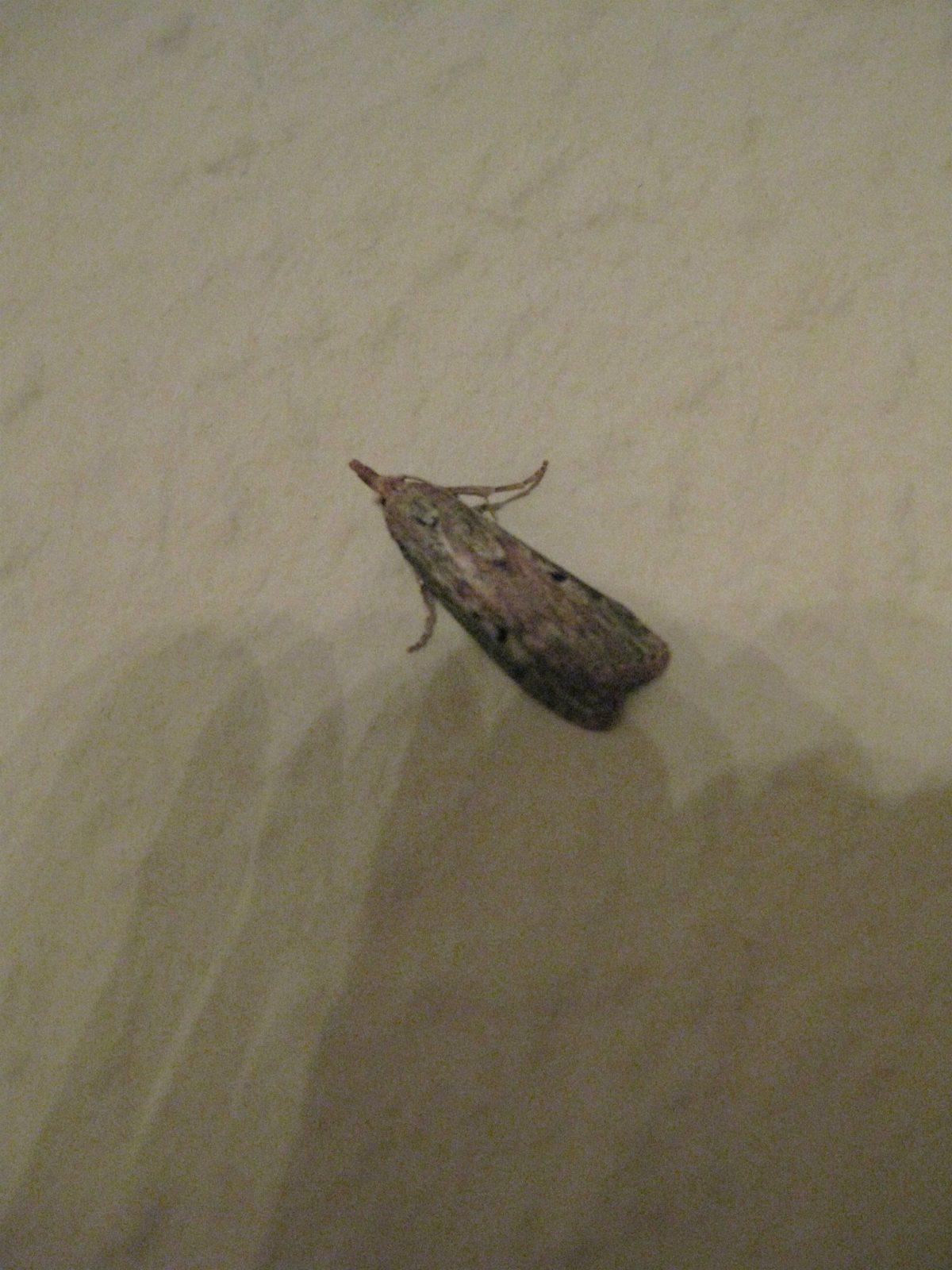 Kleine Motten von Kleine Motten Im Bad Photo