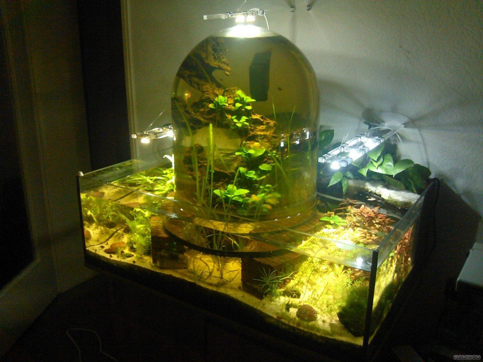 Led Grow Lampe Selber Bauen Led Grow Lampe Selber Bauen Einzigartig