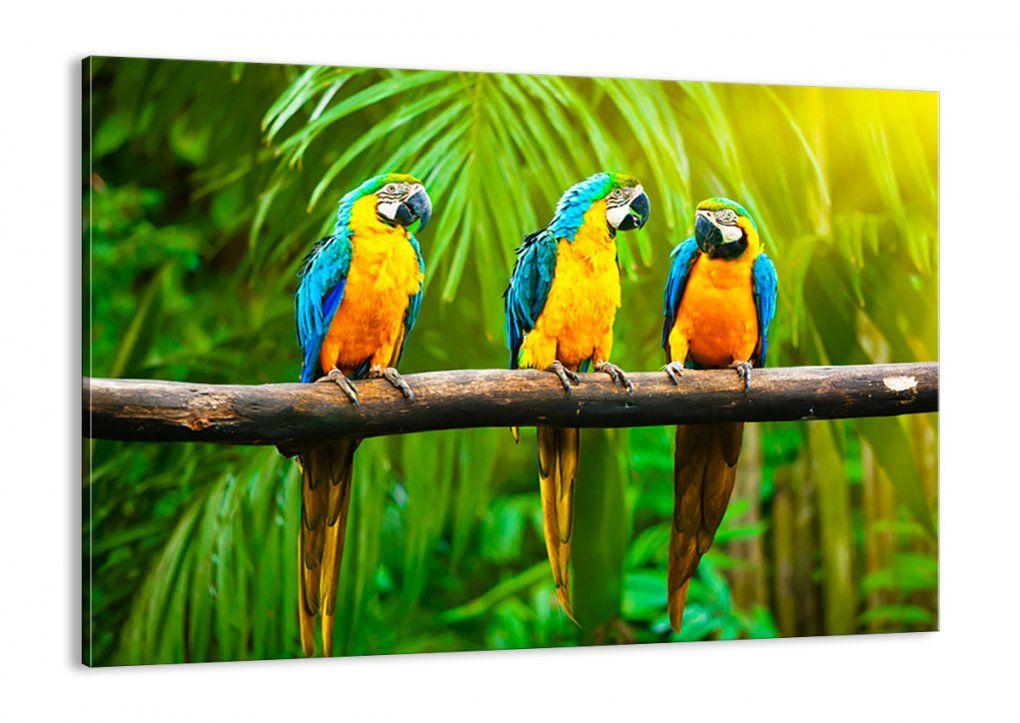 xxlgemälde papagei vogel blau gelb kaufen kunstloft von