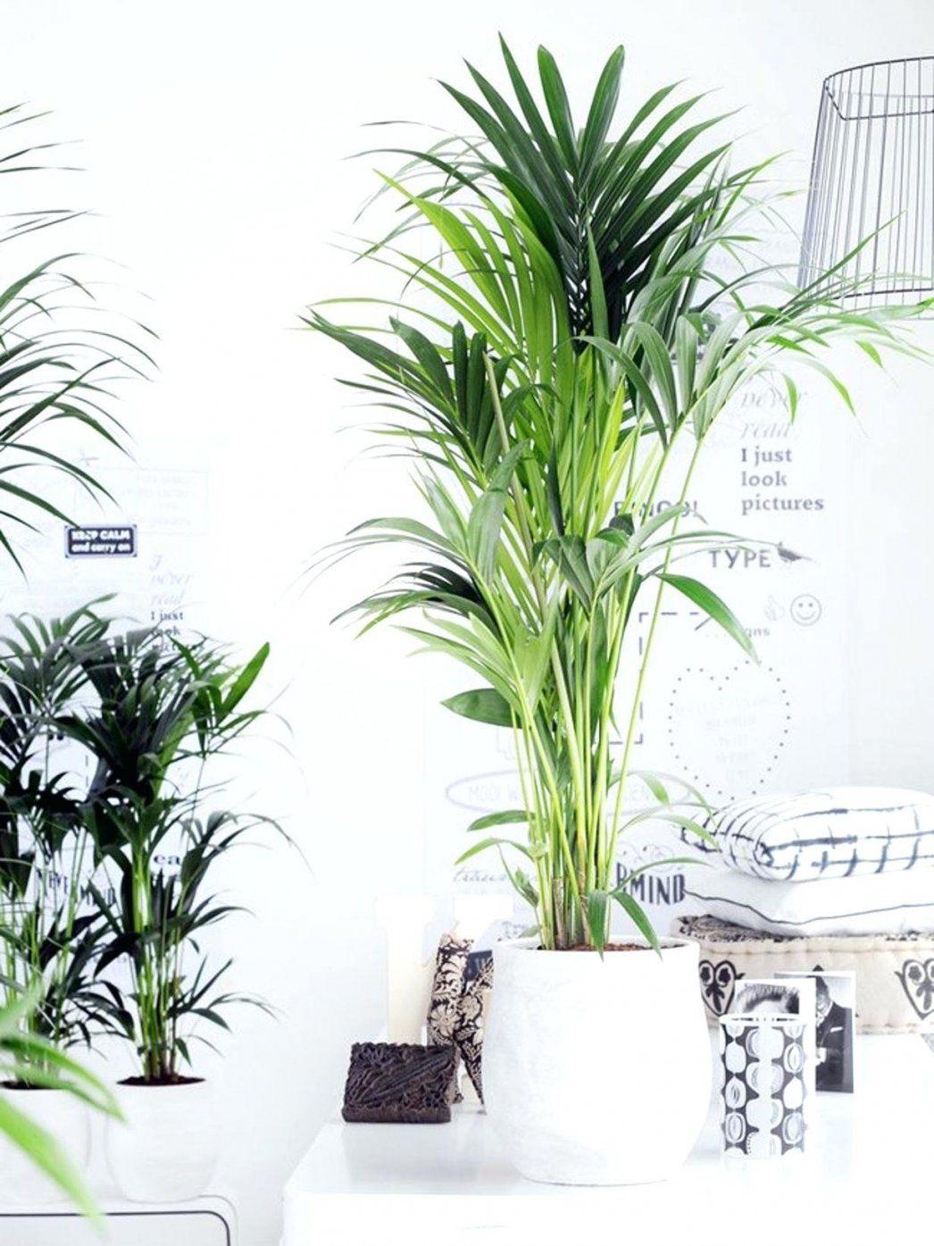Luft Reinigen Pflanzen A Schlafzimmer Ausgezeichnet Verkarperung Jan von Luftreinigende Pflanzen Fürs Schlafzimmer Photo