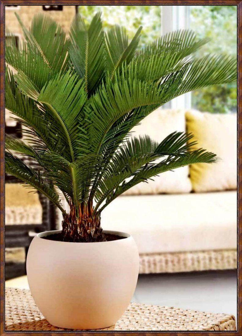 Luftreinigende Pflanzen Schlafzimmer von Luftreinigende Pflanzen Fürs Schlafzimmer Photo