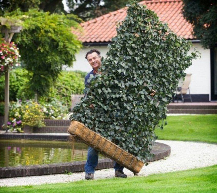 Luxus Pflanzen Als Sichtschutz Gallery Of Sichtschutz Terrasse von Sichtschutz Für Terrasse Pflanzen Photo