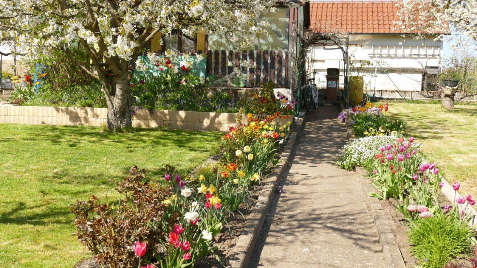 Mein Schöner Garten  Gartenführung  Youtube von Mein Schöner Garten Lidl Photo