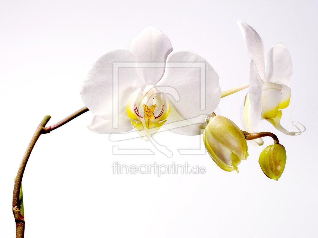 Orchidee Als Leinwanddruck 9599328  Fine Art Print von Orchideen Bilder Auf Leinwand Photo