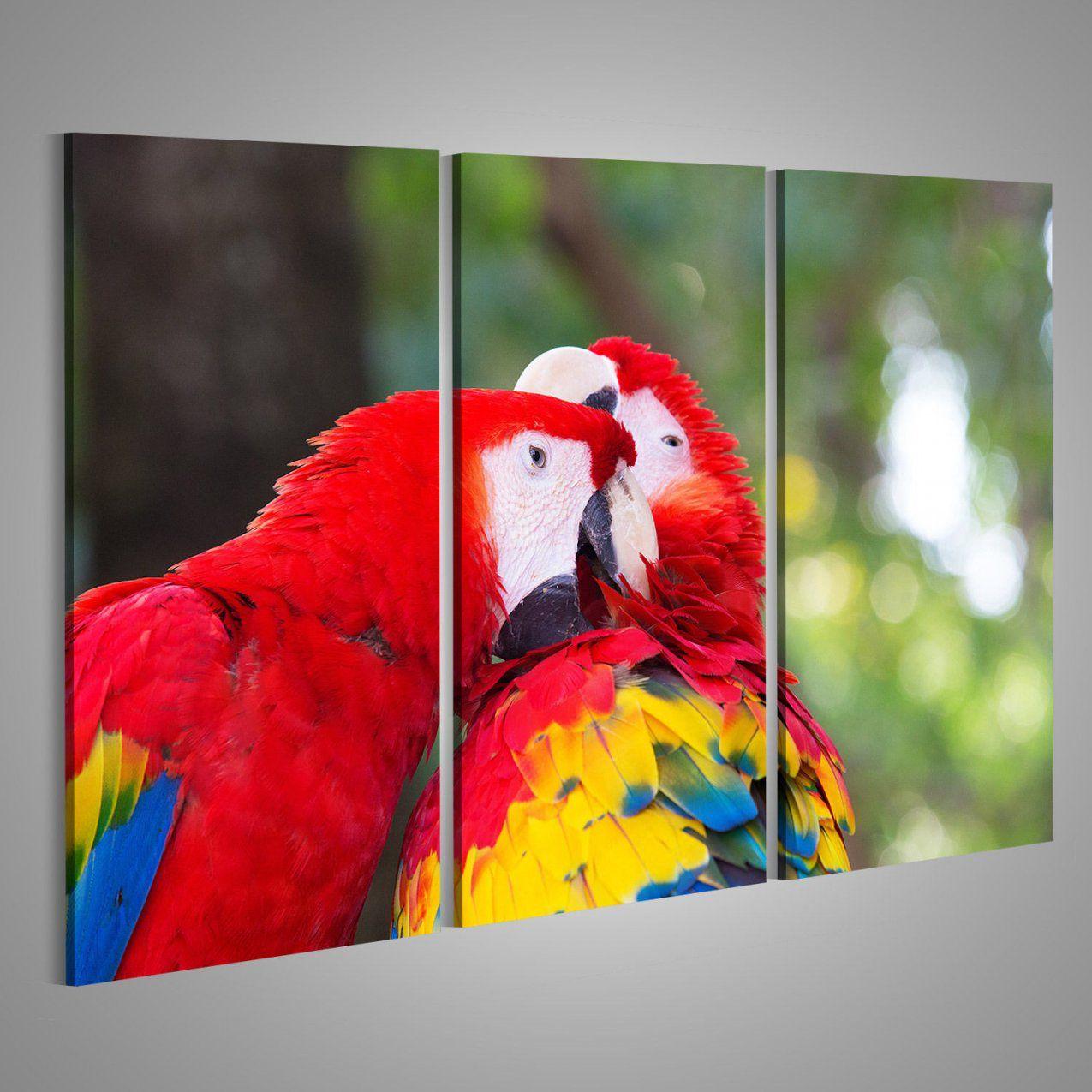 Papageien Mehr Als 1500 Angebote Fotos Preise ✓  Seite 21 von Papageien Bilder Auf Leinwand Photo