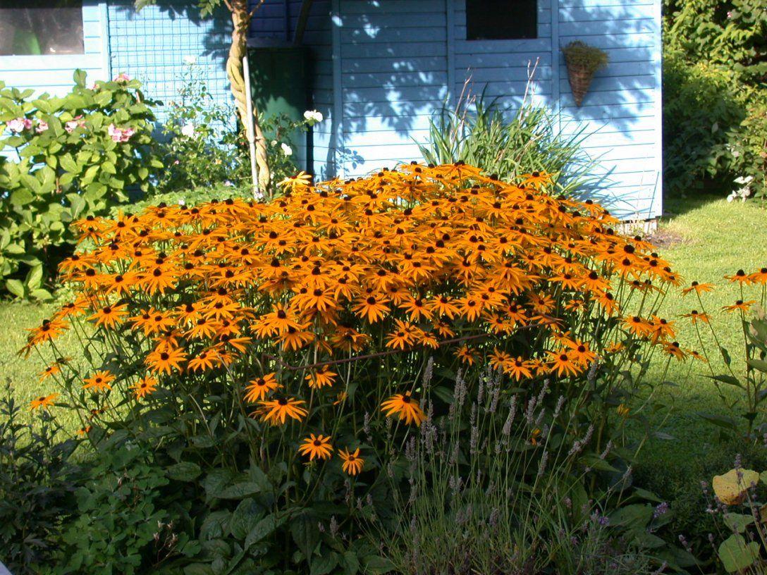 Pflanzen fr pralle sonne perfect bei allen handelt es sich for Pflanzen fur pralle sonne