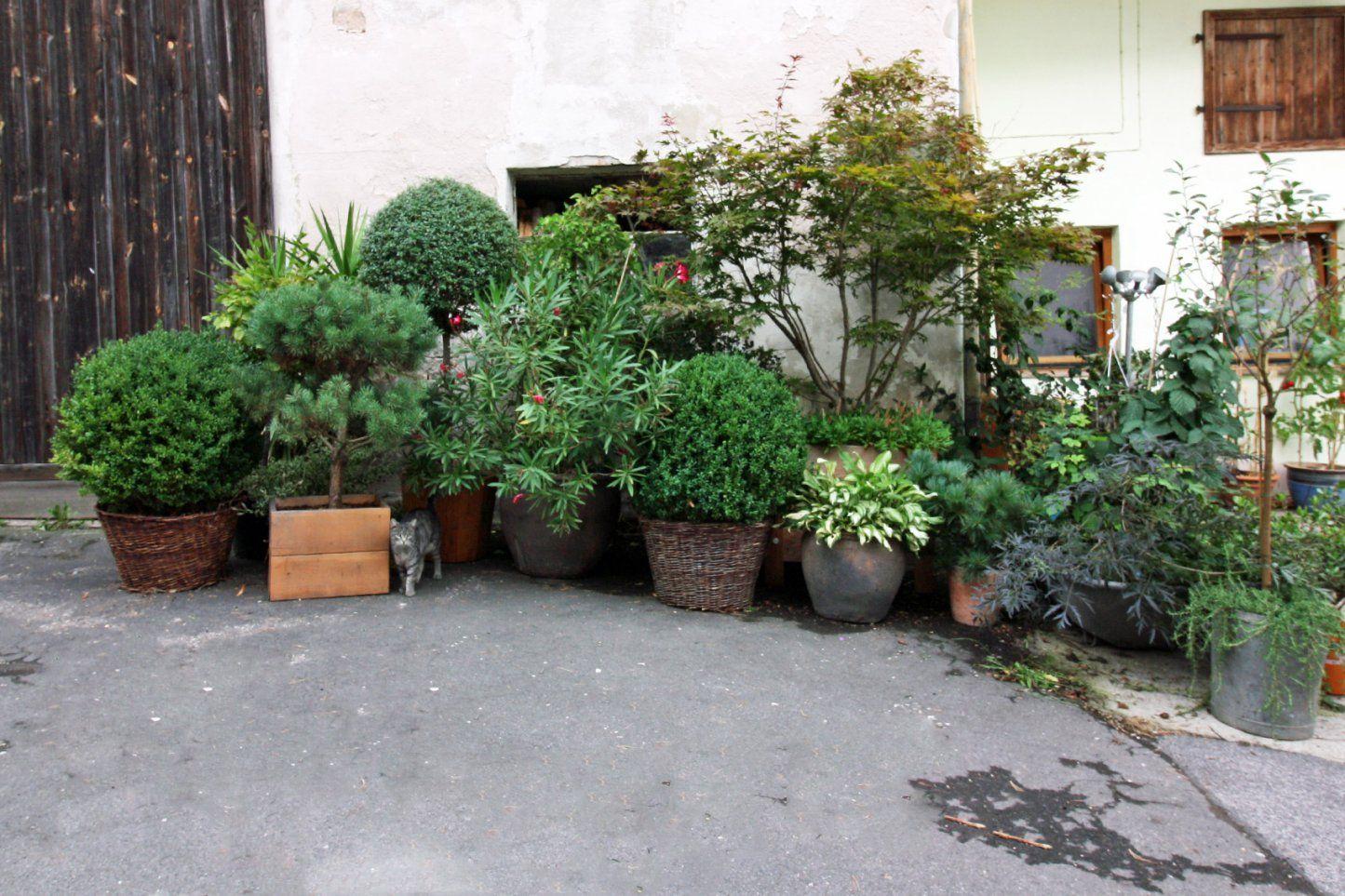 Pflanzen Für Die Kübelbepflanzung  Kübelpflanzen Für Den Garten von Balkonpflanzen Für Pralle Sonne Bild