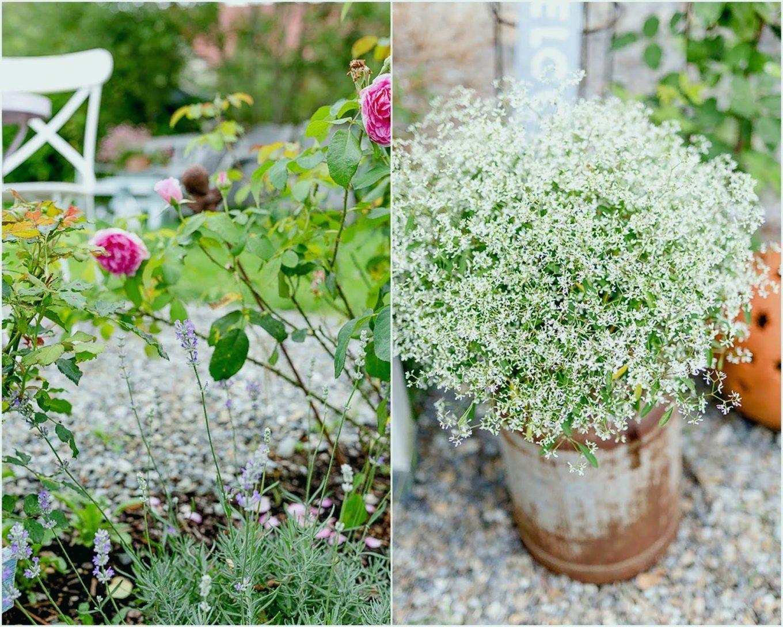 Pflanzen Für Pralle Sonne Einzigartig Balkonpflanzen Für Pralle von Balkonpflanzen Für Pralle Sonne Photo