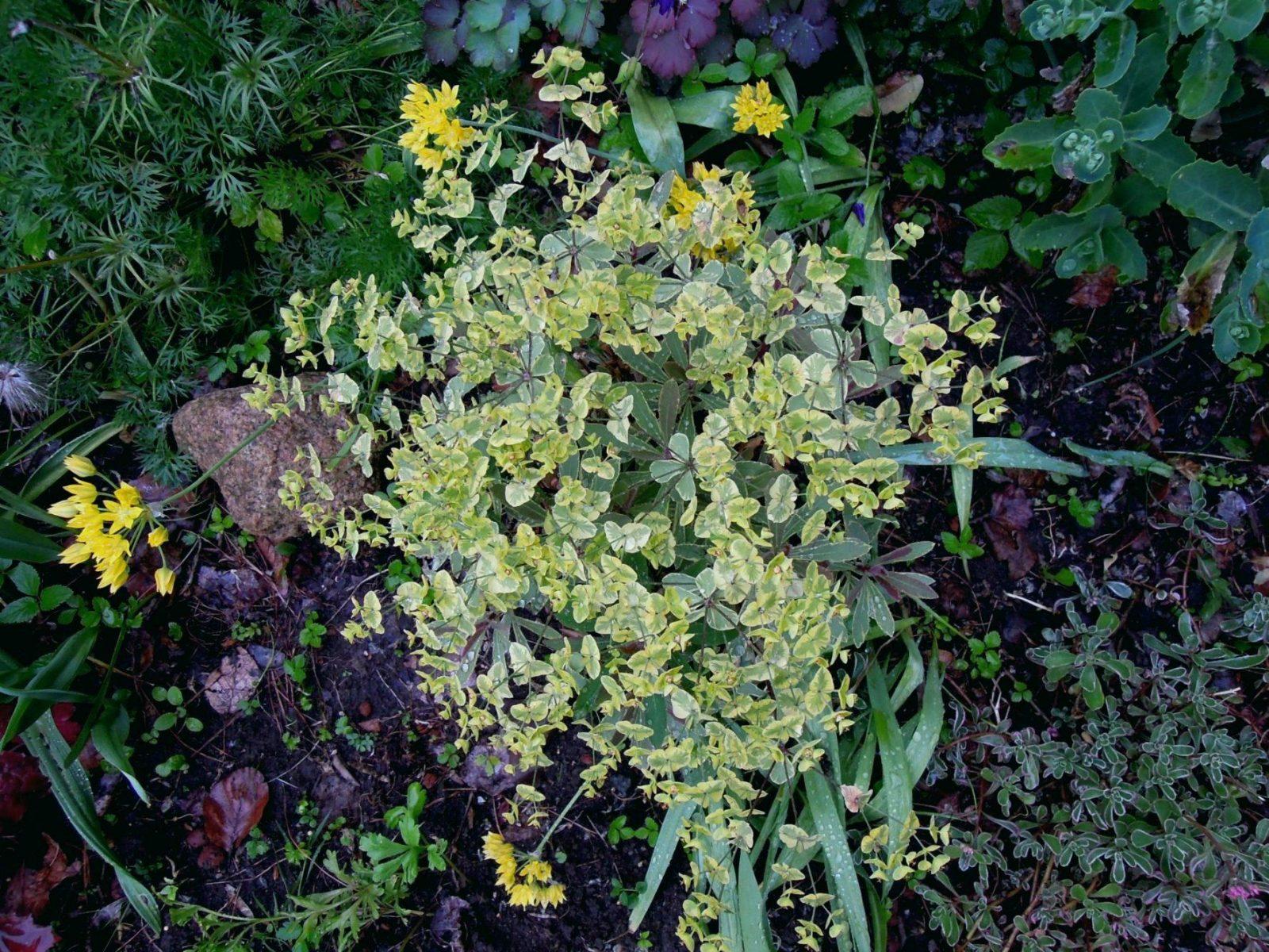 Pflanzen Für Pralle Sonne Inspirational Blumen Für Pralle Sonne von Balkonpflanzen Für Pralle Sonne Photo