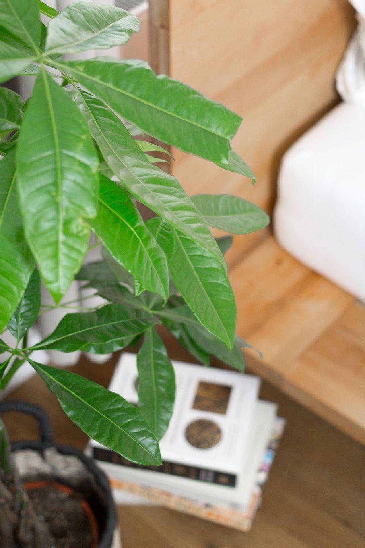 Pflanzen Fürs Schlafzimmer Ideen Luftreinigende von Luftreinigende Pflanzen Fürs Schlafzimmer Bild