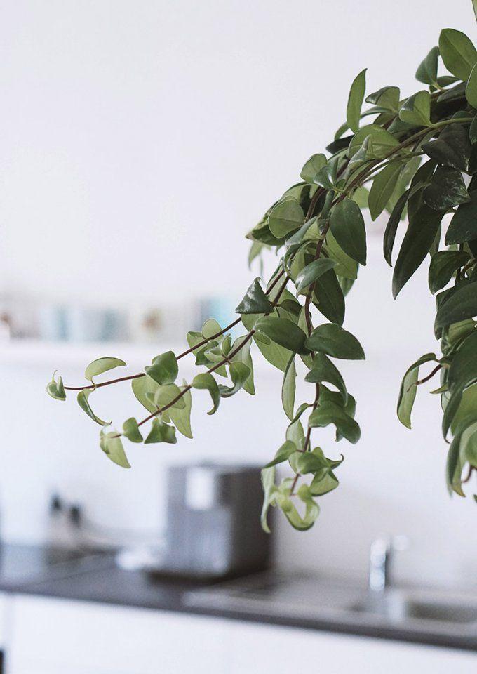 Pflanzen Fürs Schlafzimmer Ideen Luftreinigende von Luftreinigende Pflanzen Fürs Schlafzimmer Photo