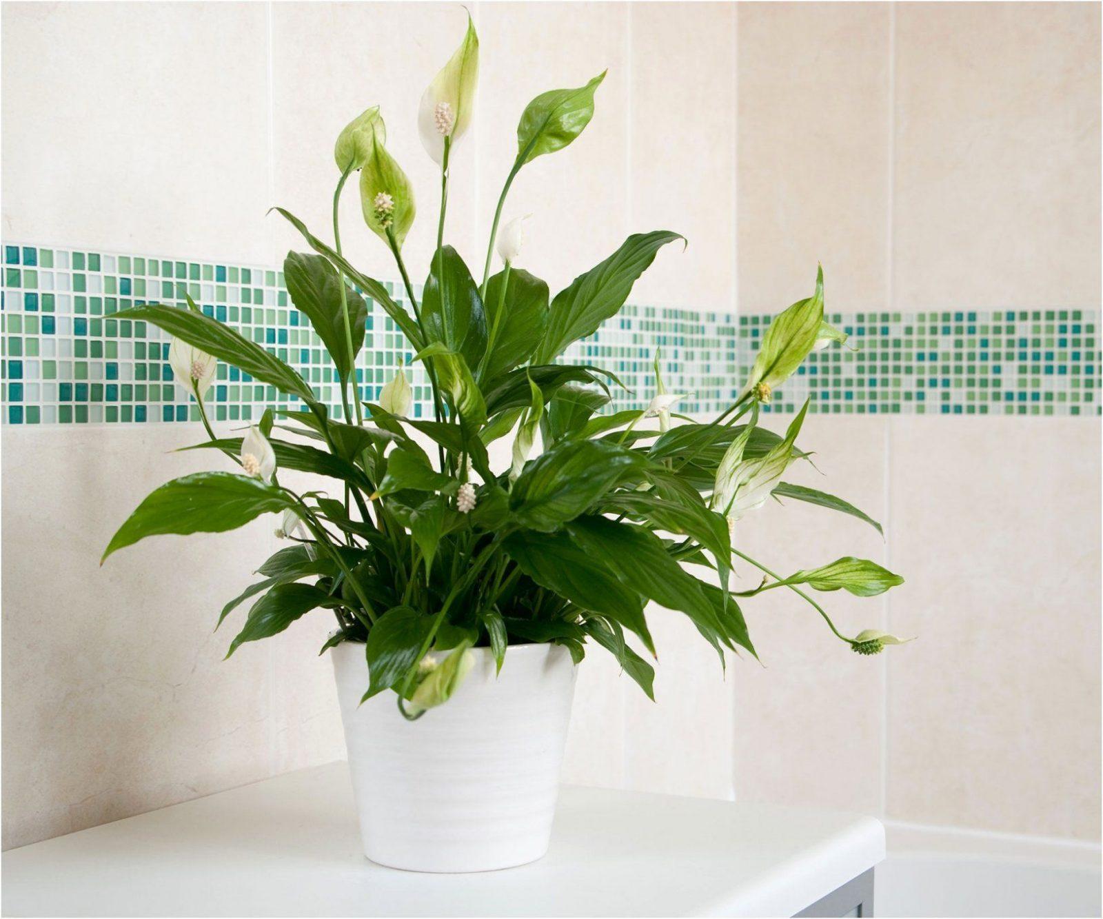 Luftreinigende Pflanzen Fürs Schlafzimmer | Haus Design Ideen