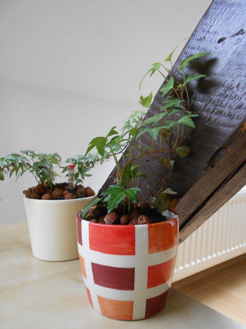 Pflanzen Im Schlafzimmer So Hast Du Einen Gesunden Schlaf Utopia von ...