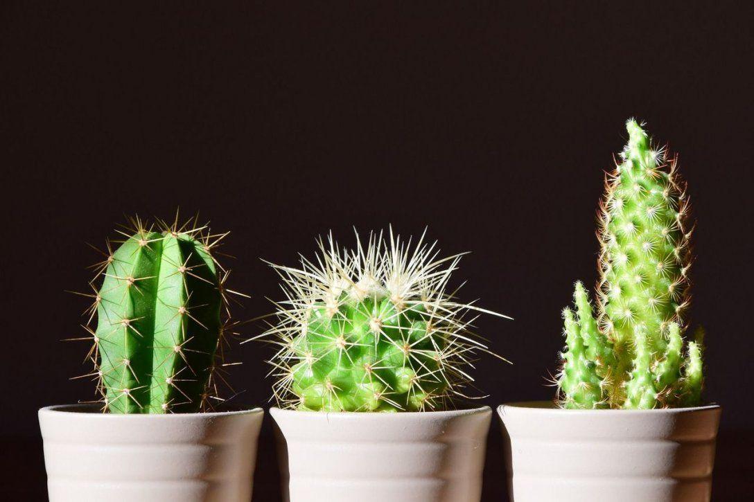 Pflanzen Im Schlafzimmer So Hast Du Einen Gesunden Schlaf  Utopia von Luftreinigende Pflanzen Fürs Schlafzimmer Bild