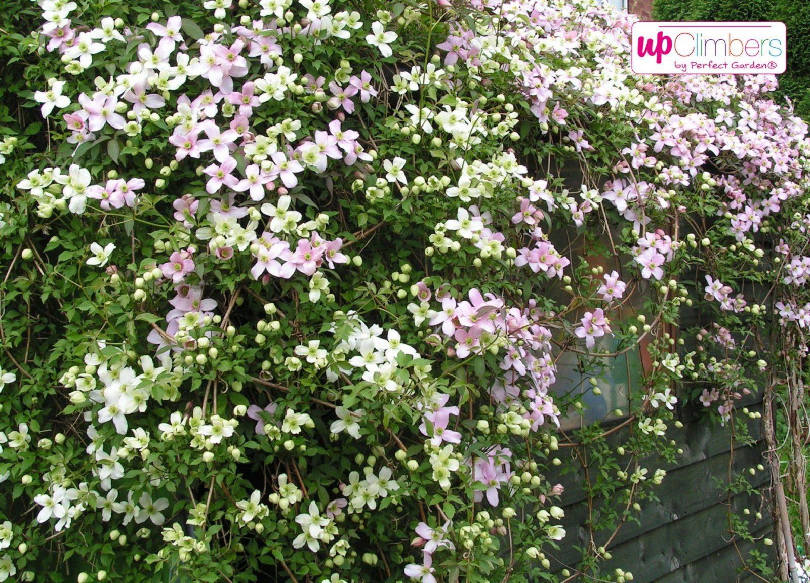 Pflanzen Pralle Sonne  Die Schönsten Einrichtungsideen von Balkonpflanzen Für Pralle Sonne Bild