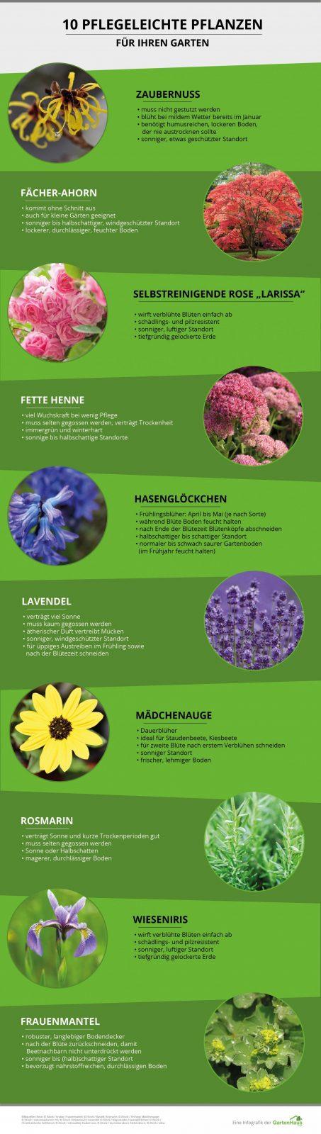 Pflegeleichter Garten Die Besten Tipps Zu Pflanzen Möbeln & Co von Pflegeleichte Pflanzen Für Den Vorgarten Bild