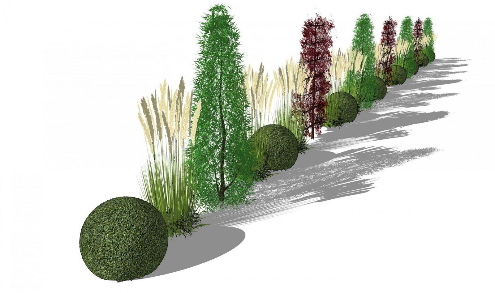 Säulenbäume Und Gräserhecke von Schmale Hecke Als Sichtschutz Photo