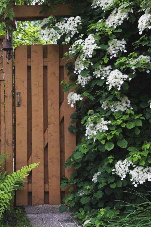 Schnellwachsende Kletterpflanze Garten Beeindruckend Immergrün von Schnell Wachsende Kletterpflanze Immergrün Photo
