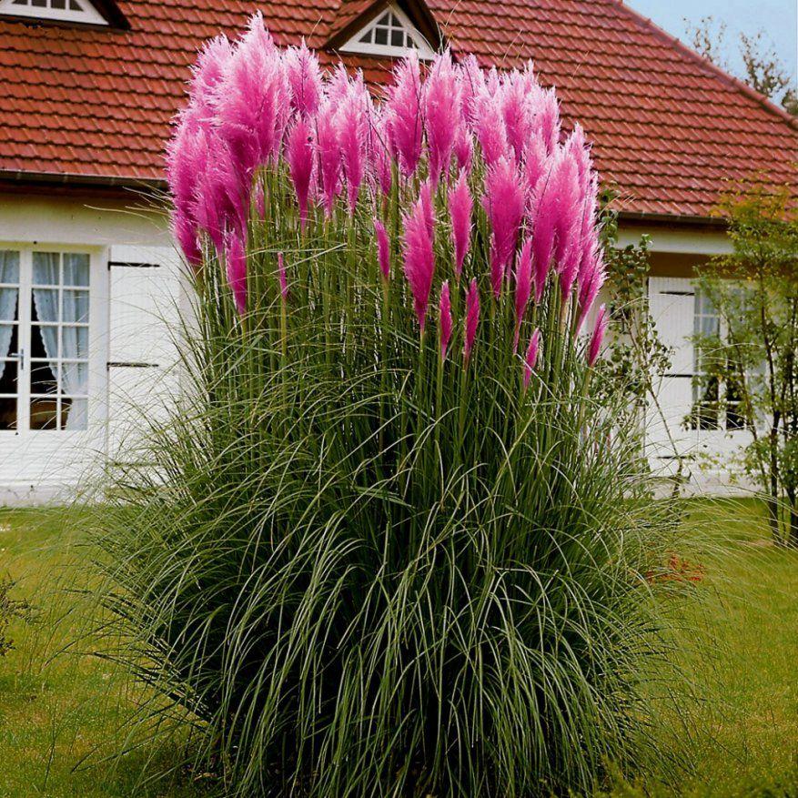 Schöne Exotische Pflanzen Für Den Garten Wohnkultur Winterharte von Winterharte Exotische Pflanzen Für Den Garten Bild
