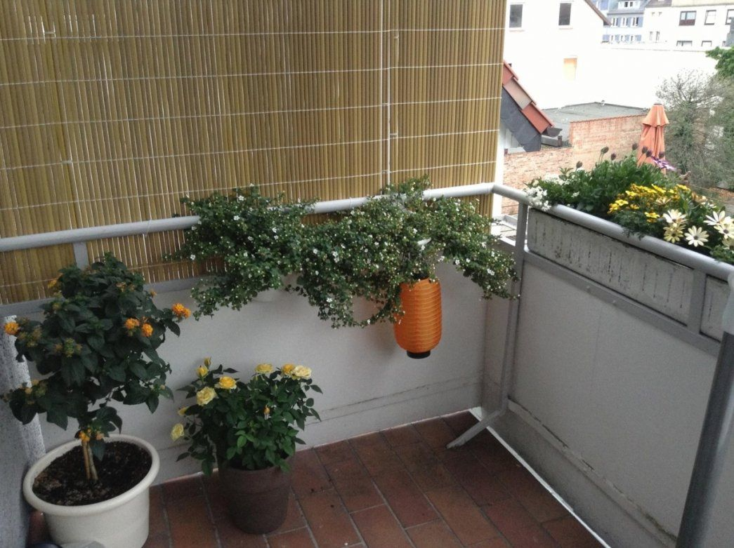 Sichtschutz Balkon Selber Bauen von Sichtschutz Balkon Selber Machen Bild