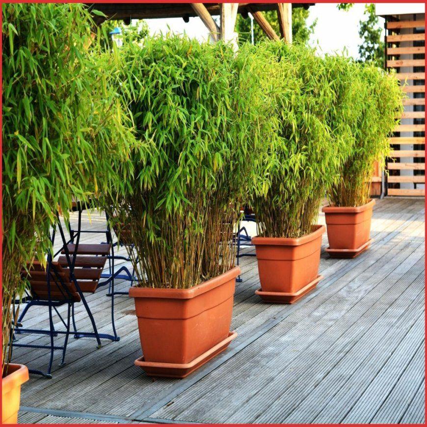 Sichtschutz Garten Pflanzen 269824 Pflanzen Sichtschutz Terrasse von Sichtschutz Für Terrasse Pflanzen Photo
