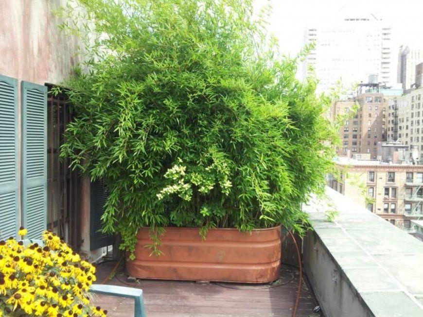 Sichtschutz Terrasse Bambus Bambus Im K Bel Als Sichtschutz Und von Sichtschutz Für Terrasse Pflanzen Photo