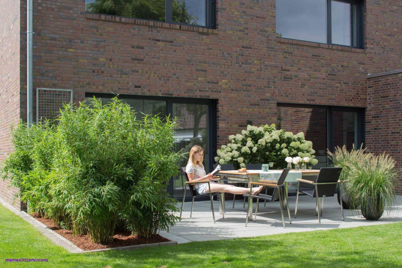 Sichtschutz Terrasse Bepflanzung Durchgehend Pflanzen Als von Sichtschutz Für Terrasse Pflanzen Bild