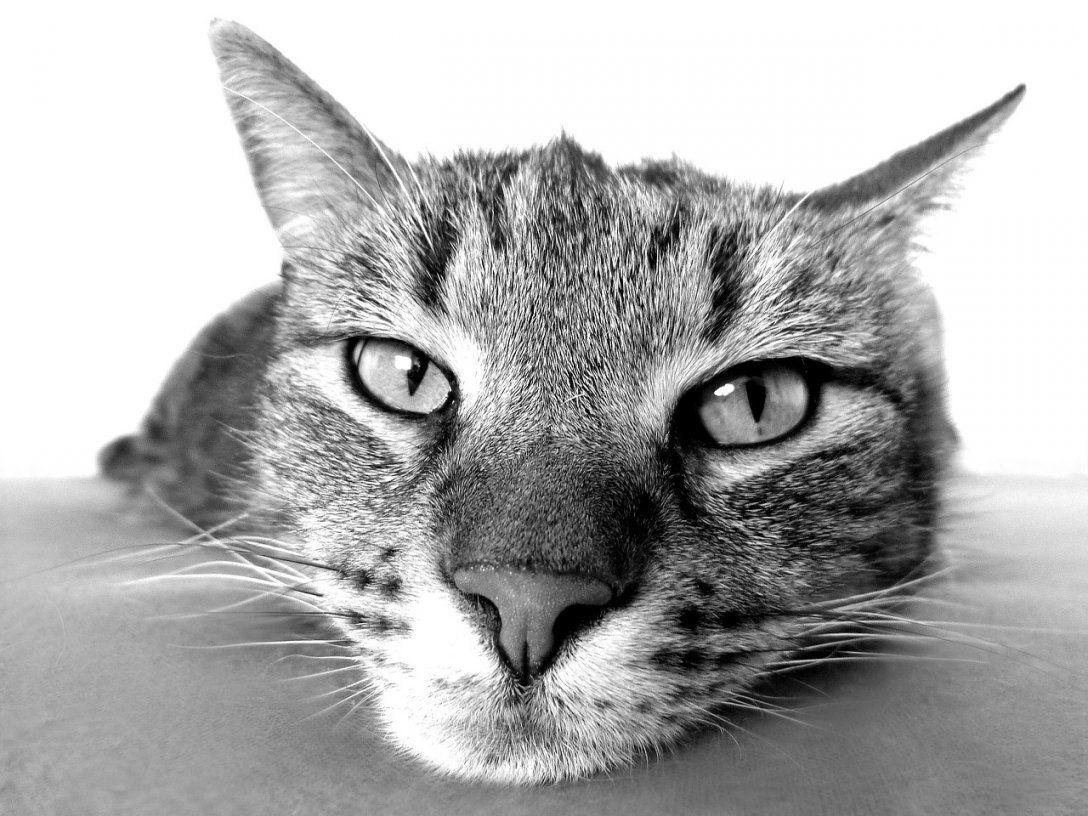 So Entfernen Sie Katzenurin Und Seinen Geruch von Katzenurin Aus Teppich Entfernen Bild